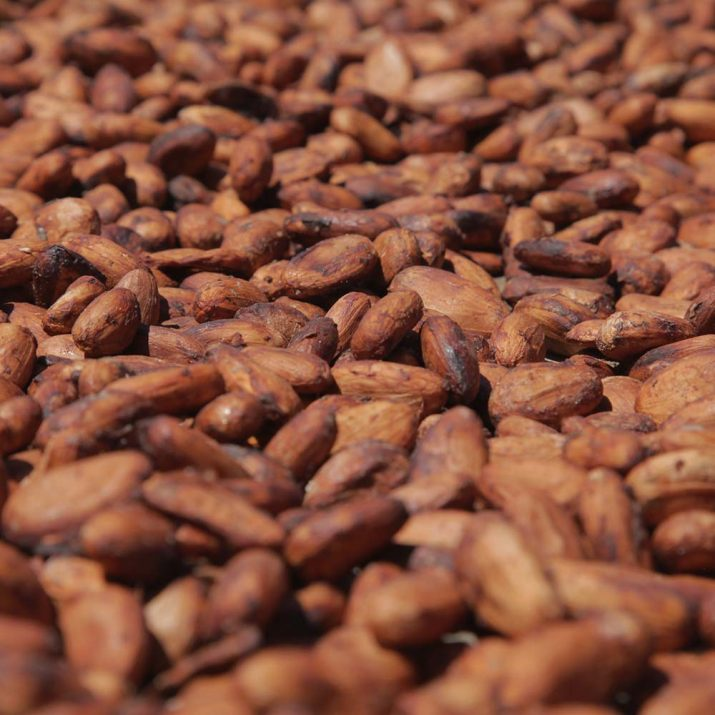 Pierre Marcolini Know-how Tree to bean Trocknen bean to bar